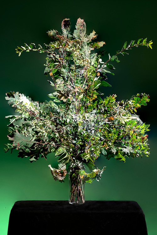 green leaved plant twigs composite still life