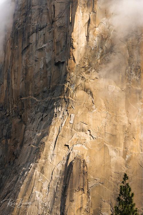 El Capitan detail, Yosemite National Park, California USA