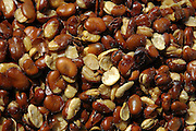 Vicia faba, broad bean,