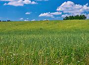 Krajobraz Suwalszczyzny w okolicach Bachanowa, Polska<br /> Landscape of the Suwałki Region near Bachanowo, Poland