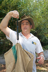 David Lindenmayer Weighing Mountain Brushtail Possum