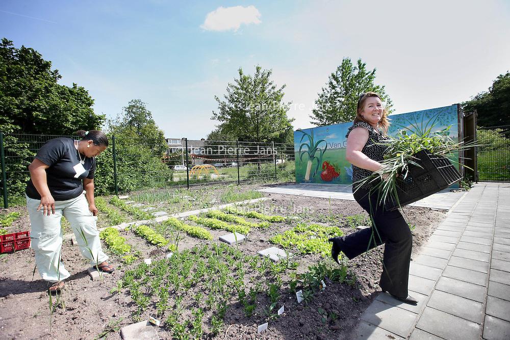 """Nederland, Rotterdam , 22 juni 2010..Dantetuin in de Dantestraat.Collectieve  groententuin in het project """"Van Grond tot Mond""""..Collective vegetable garden in the project """"From Land to Mouth"""" in Rotterdam."""