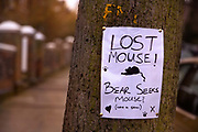 Lost Mouse poster pinned to a tree on Highgate street, London, United Kingdom. The message Bear seeks mouse indicates a love message from a man bear to a woman mouse, and pinned outside her house