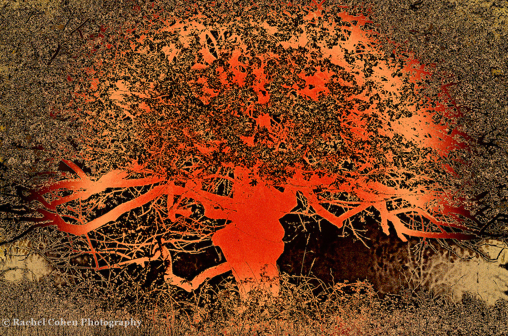 """""""Tree of Life in Orange"""" <br /> <br /> A work of art! This tree of life is in shades of orange, gold, and brown. A tree with a Asian or Far Eastern feel to it!"""