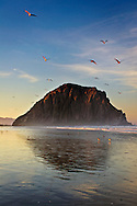 Sea Gulls flying over Morro Rock at dawn, Morro Strand State Beach, Morro Bay, California