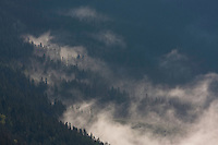 Clouds and old mountain forest on slope of the Kouprova valley. Western Tatras, Slovakia. June 2009. Mission: Ticha