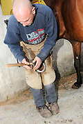 Farrier preparing a horse's hoof removing the old shoe