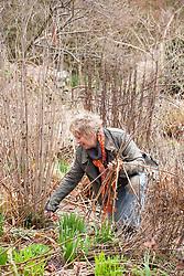 Carol Klein cutting back old fennel stems