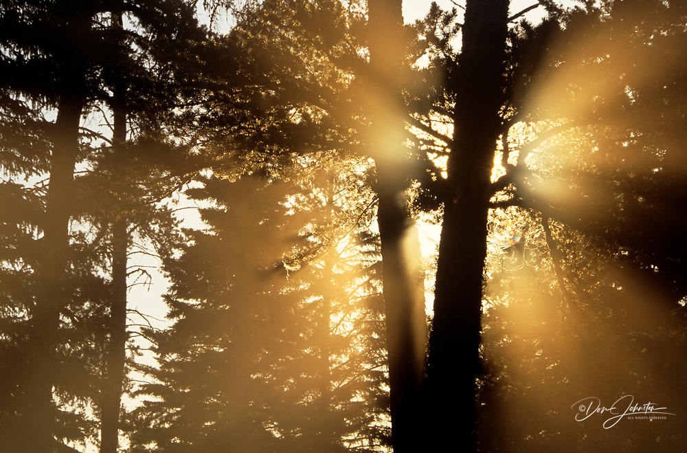 Sunbeams through morning mists at Whirlpool lake
