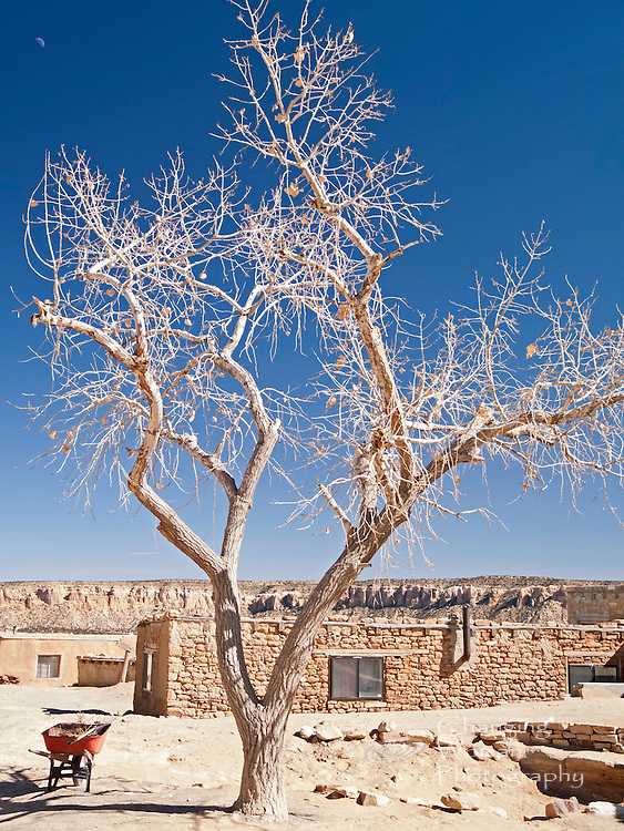 Vegetation is sparse at the top of Sky City's arid mesa.  Plants need water, and, historically, water for a family's use was hand-carried up the cliff.  Agriculture was only developed in the valley below.  This cottonwood tree, its winter-barren branches awaiting spring's arrival, has been nurtured for decades to provide beauty and shade for its human brothers and sisters.