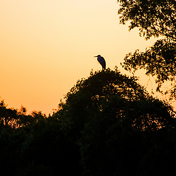 """Amanhecer no Pantanal (Paisagem) fotografado em Corumbá, Mato Grosso do Sul. Bioma Pantanal. Registro feito em 2017.<br /> <br /> <br /> <br /> ENGLISH: Breaking Dawn in the Pantanal photographed in Corumbá, Mato Grosso do Sul. Pantanal Biome. Picture made in 2017."""