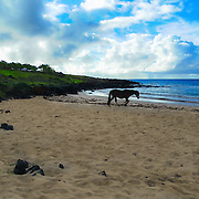 In Anakena Beach in  Easter Island you can find wild horses wandering along the beach.
