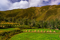 Barley and mustard fields at the foot of Kambala Pass, Tibet (Xizang, China).