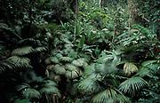 Khao Phra Taew Reserve, Phuket, Thailand, Jungle, Rainforest, Leaves, Green