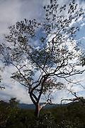 Sao Goncalo do Rio Preto_MG, Brasil...Circuito Estrada Real, na foto  Parque Estadual do Rio Preto, em Sao Goncalo do Rio Preto, Minas Gerais...The circuit Estrada Real (Real Road Circuit), in this photo the Rio Preto State Park, in Sao Goncalo do Rio Preto, Minas Gerais...Foto: LEO DRUMOND / NITRO