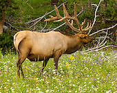 Yellowstone National Park - 20140808 - Day 6