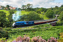 © Licensed to London News Pictures. 05/04/2016. Goathland UK. File picture shows the Sir Nigel Gresley locomotive, the 100th steam train built & designed by Sir Nigel Gresley. A statue will be unveiled today of the famous engineer Sir Nigel Gresley in London's King's Cross station to make the 75th anniversary of his death. Sir Nigel designed the Mallard, the Sir Nigel Gresley & the Flying Scotsman.  Photo credit: Andrew McCaren/LNP