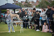 Dog-show, Bexhill Horse show. Polegrove, Bexhill on Sea. 29 May 2016