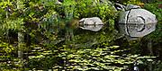 Panorama image, pond with lilypads, Cheshire County, Nrw Hampshire, USA