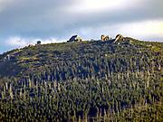 Szczyt Szrenicy widziany ze Szklarskiej Poręby