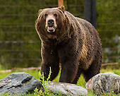 Yellowstone National Park - 20140804 - Day 2