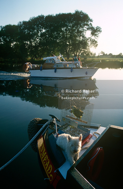 """A motor launch passes a narrow boat with parrot and dog in the early morning on a still River Thames at Dorchester, Oxfordshire. In the foreground is a caged parrot and a small Scotty dog. We see a scene of early misty light across the perfectly still waters, a landscape of peace and tranquillity. The mirror-like surface is at Dorchester-on-Thames, just above the Thame's confluence with the River Thames. The River Thames is the second longest river in the United Kingdom and the longest river entirely in England (215 miles or 346 km long). It rises at Thames Head in Gloucestershire, and flows into the North Sea at the Thames Estuary. Historically the Thames was only so-named downstream of the village; upstream it is named the Isis, and Ordnance Survey maps continue to label the river as """"River Thames or Isis"""" until Dorchester."""