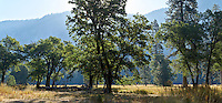 Yosemite trees. (30010 x 13953 pixels)