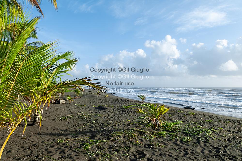 Costa Rica, province de Limon, bord de mer et plage dans Parc national de Tortuguero, forêt humide // Costa Rica, province of Limon, beach and front sea in Tortuguero National Park , wet forest