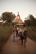 Wagon driver with the Shwesadaw temple on the back, in Bagan, Burma.<br />