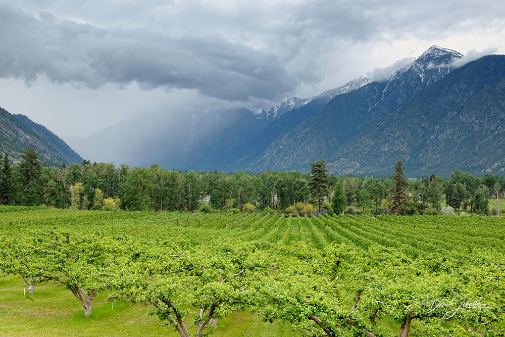 Similkameen Valley with fruit trees, Cawston, BC, Canada
