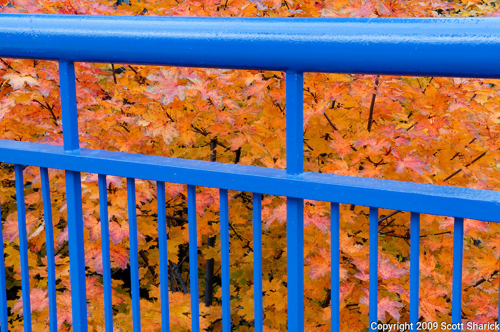 In this image of Rochester the golden leaves of autumn are set behind the blue railing at Upper Falls.