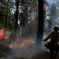 Cal Fire firefighter Michael Mauel approaches flames as he and his crew battle the Warnella Fire north of Davenport on Sunday. The blaze had consumed 25 acres ad was 25% contained by midafternoon on Sunday.  (Shmuel Thaler - Santa Cruz Sentinel)
