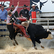 Cameron MacDonald from Winton in action during the Open Bull Ride competition at the Southland Rodeo, Invercargill,  New Zealand. 29th January 2012