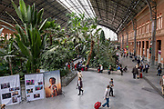 Travellers in the botanical garden area inside the central interior plaza of the old Atocha train station, on the 30th of October 2019 in Madrid, Spain. The Madrid-Puerta de Atocha train station serves commuters for all the south and south east regions of Spain.