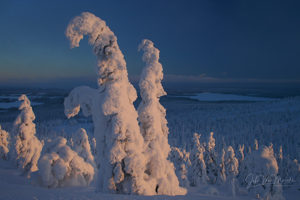 Frozen trees are bending under the heavy weight of the snow on a hill at Ruka, Kuusamo, during the last rays of the setting sun at -17°C.