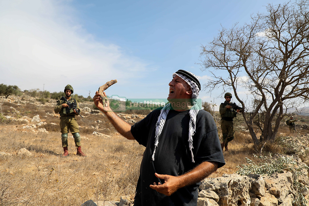 """October 8, 2018 - A day of voluntary olive picking near the settlement of Rahalim on an olive field part of the As-Sawiya Palestinian town, south of Nablus, in the presence of the Committee Against the Wall and Settlements, the Nablus governor and the British consul. Palestinian farmers usually need special permits to access their olive fields in the proximity of Israeli settlements, and sometimes they are even banned from them. Voluntary days of olive harvesting provide support and protections to these farmers when attending their fields and reduce the harassment from the Israeli army and settlers. Olives are a main source of income to hundreds of Palestinian families and being able to attend their fields is extremely important to them. A part from the continuous uprooting of olive trees and destruction of olive fields to make space to Israeli settlements and their expansion, to settlements roads, Israeli military zones, and the """"security wall"""", farmers in the West Bank  have also witnessed several incidents of crop theft, olive trees chopping, harassment, and physical attacks by Israeli settlers. The Palestinian authority has no jurisdiction over Israelis in the West Bank,  which means that it can't prosecute Israeli settlers whose attacks often occur in the presence of Israeli military forces and are usually met with impunity (Credit Image: © Mohammed Turabi/IMAGESLIVE via ZUMA Wire)"""
