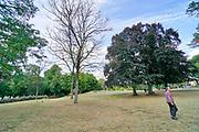 Nederland, Nijmegen, 8-8-2019 Door de aanhoudende droogte hebben mens en natuur het moeilijk . Doordat regenval uitblijft worden de waterbuffers kleiner . Kronenburgerpark in het centrum van de stad, met vergeelde grasmat, gras . Mensen relaxen op vergeeld gras terwijl bomen hun blad verliezen . . Foto: Flip Franssen
