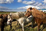 Horse riding in Southern Iceland. <br /> Hvitardalur farm.