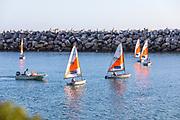 Youth Sailboats in the West Basin Marina of Dana Point Harbor