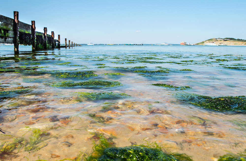 Incoming tide and floating seaweed at Colwell Bay, Isle of Wight