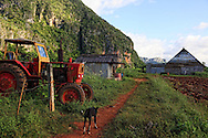 A farm near Vinales, Pinar del Rio, Cuba. A dog is walking down a path past a tractor. There is a barn and mogotes in the background.