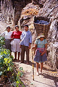 A series of images about port wine production in Portugal c 1960 - family group with young woman carrying heavy basket of grapes
