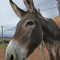 A burro stands in a corral near Santa Fe, New Mexico.