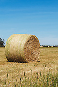 Round hay bales in a paddock on a farm after baling in rural Mingay, Victoria, Australia. <br /> <br /> Editions:- Open Edition Print / Stock Image