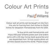Colour Art Prints