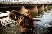 25th May 2014, Yamuna River, New Delhi, India. A mahout interacts with an elephant as it bathes under a bridge in the Yamuna river in New Delhi, India on the 25th May 2014<br /> <br /> Elephant handlers (Mahouts) eke out a living in makeshift camps on the banks of the Yamuna River in New Delhi. They survive on a small retainer paid by the elephant owners and by giving rides to passers by. The owners keep all the money from hiring the animals out for religious festivals, events and weddings, they also are involved in the illegal trade of captive elephants. The living conditions and treatment of elephants kept in cities in North India is extremely harsh, the handlers use the banned 'ankush' or bullhook to control the animals through daily beatings, the animals have no proper shelters are forced to walk on burning hot tarmac and stand for hours with their feet chained together. <br /> <br /> PHOTOGRAPH BY AND COPYRIGHT OF SIMON DE TREY-WHITE<br /> + 91 98103 99809<br /> email: simon@simondetreywhite.com photographer in delhi