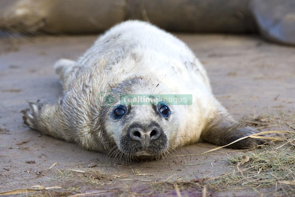 July 21, 2019 - Seal Lying On Ground (Credit Image: © John Short/Design Pics via ZUMA Wire)