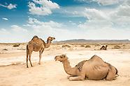 """The Desert is Beautiful"". Morocco 2015"