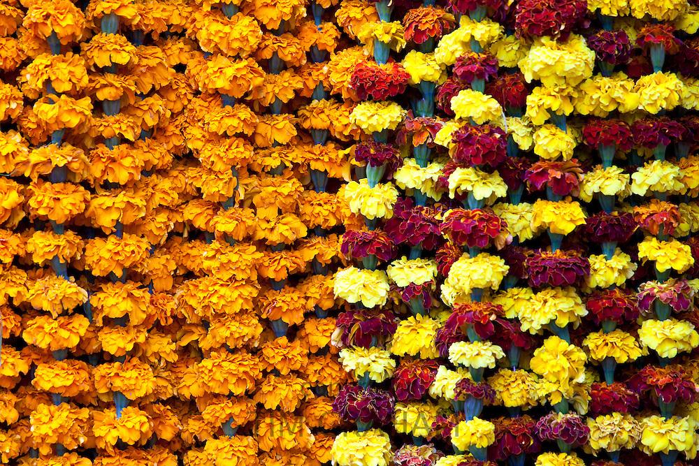 Marigolds in ceremonial Brahmin garlands at Mehrauli Flower Market, New Delhi, India