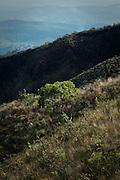 Nova Lima_MG, Brasil...Estacao Ecologica de Fechos em Nova Lima, Minas Gerais...Fechos Ecological Station in Nova Lima, Minas Gerais...Foto: BRUNO MAGALHAES / NITRO..